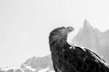 Eagle Wings – Protecting the Alps